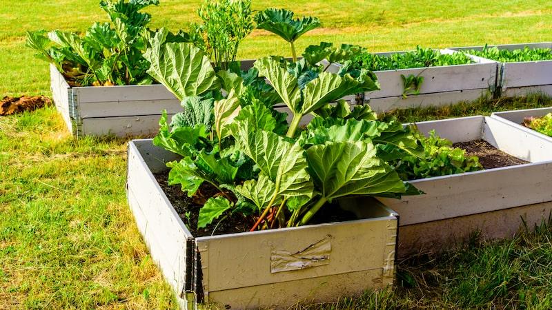 Du kan odla nästan vad som helst i en pallkrage.