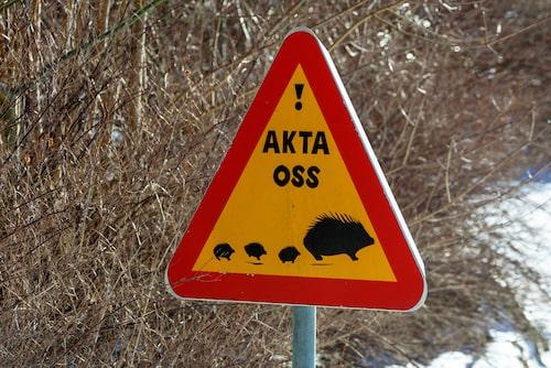 I Hovmansbygd i Skåne varnar trafikskyltar för igelkottar i området.