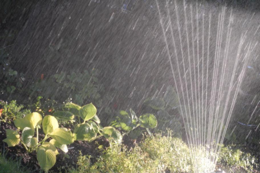 STEG 7. Börja vattna tidigt.<br>Börja vattna de partier som kan vattnas så snart det är möjligt utan att det stör det fortsatta arbetet.