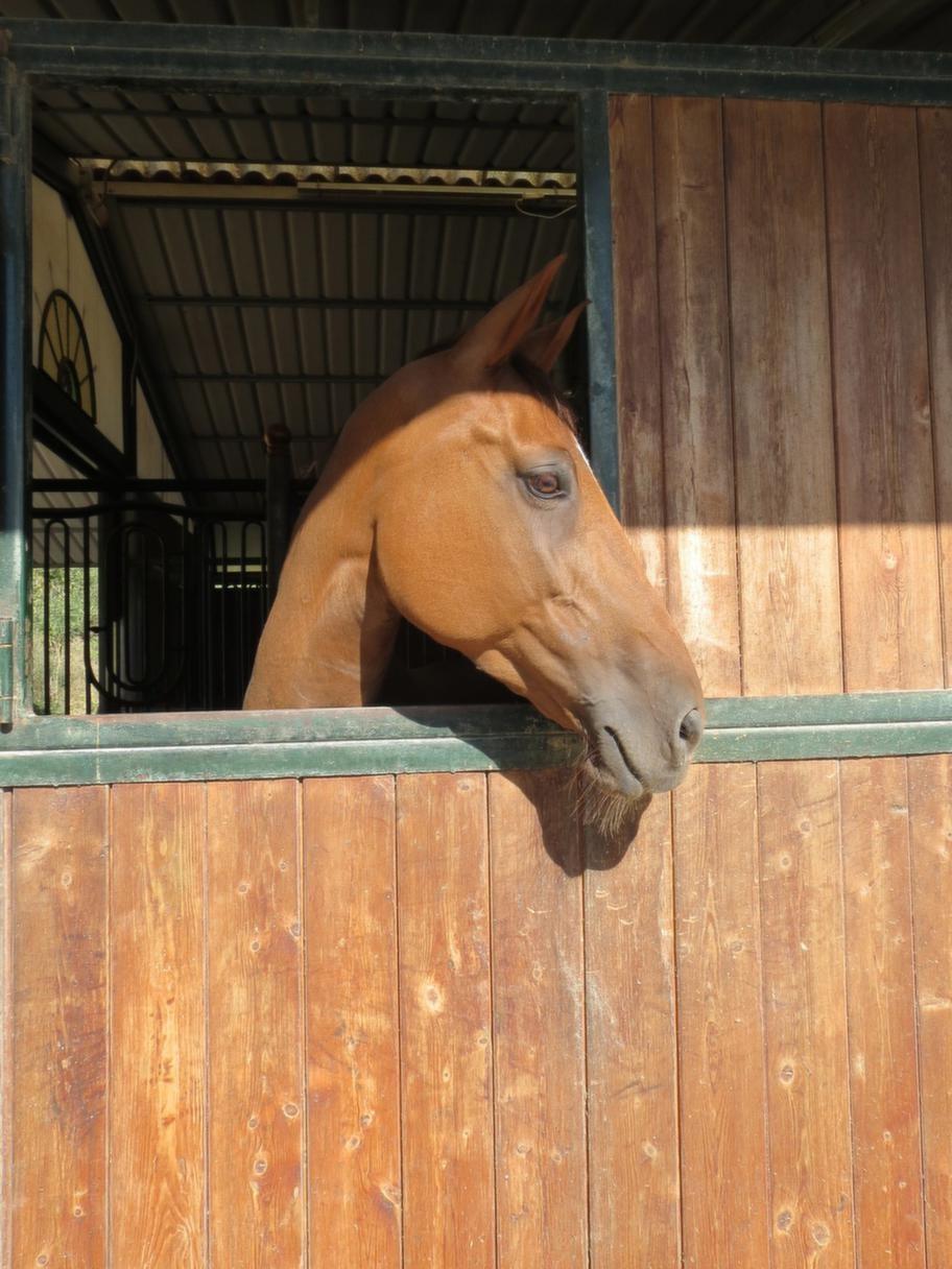 I stallet finns ett 30-tal hästar.