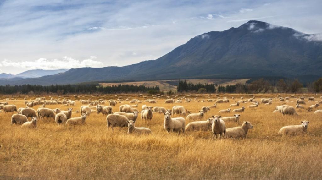 De största arbetsgivarna i regionen hör till den primära sektorn. Här finns bland annat ett mejeri.