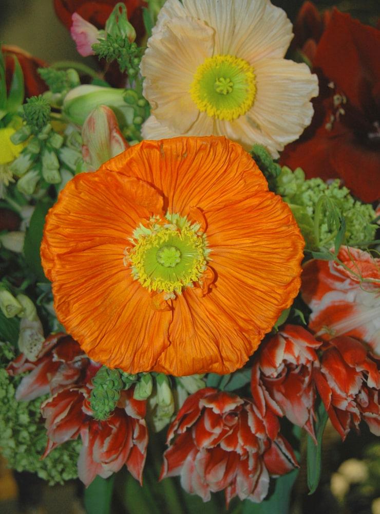 Personliga blomsterbuketter. Floristen Bloem gör arrangemang och levererar hem på beställning från sin ateljé i Årsta trädgårdshallar.