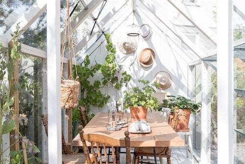 På den lummiga tomten står ett litet växthus med plats för ett mindre sällskap.