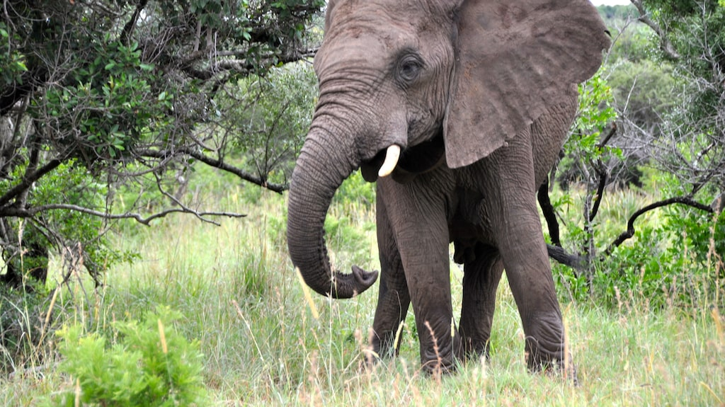 Sydafrika lockar årligen turister med sin vackra, vilda natur. Men kriminaliteten i landet är välkänd världen över.