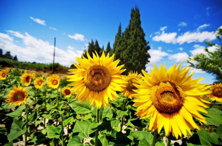 Ljuset är A och O när det gäller fotografi. En bra tumregel är att försöka ha solen i ryggen.