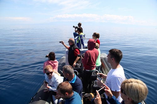 Delfinspaning vid Losinj.