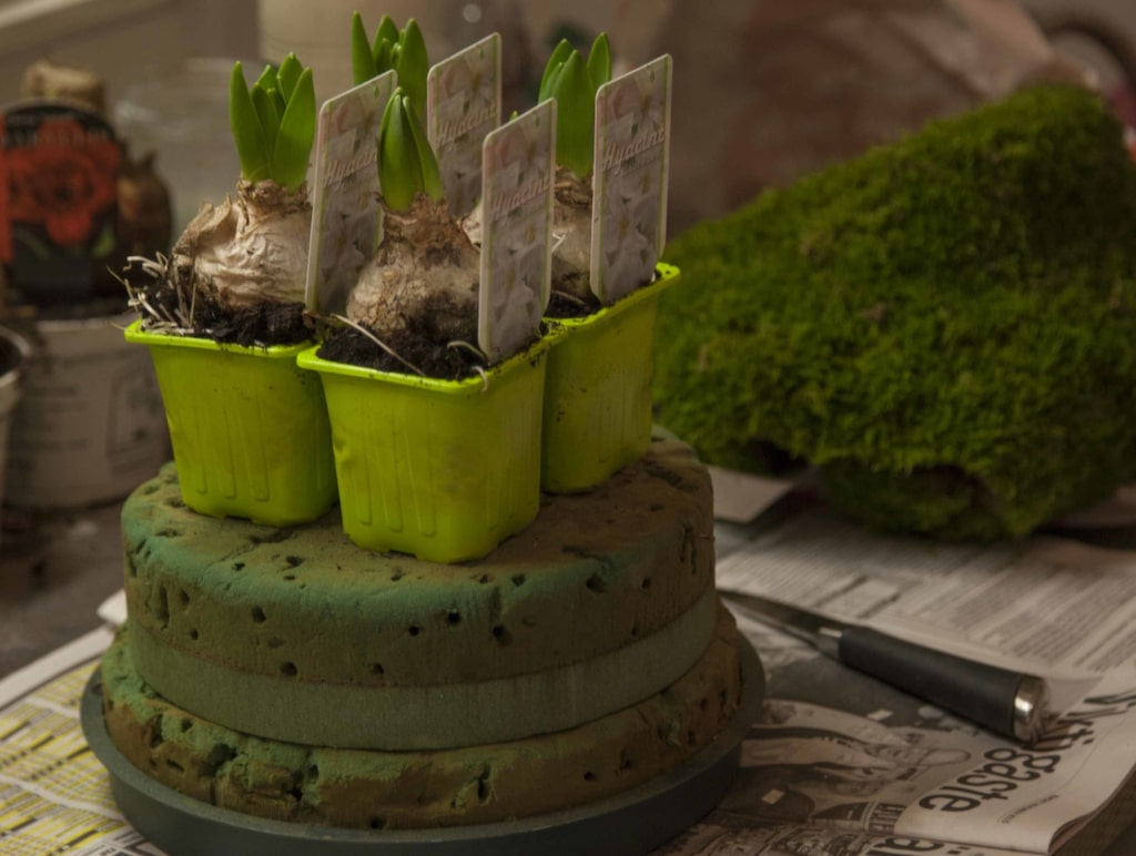 """Du behöver två runda """"tårtbottnar"""" i oasis."""