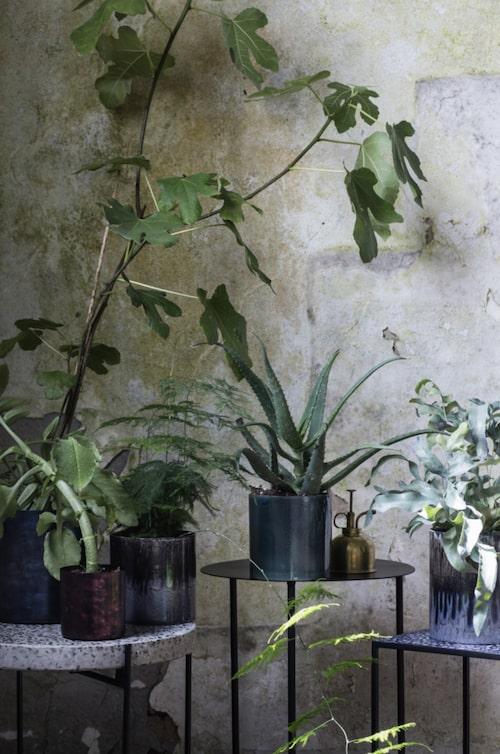 Inneväxter. Låt gröna blad ta plats i hemmet! Här inspiration från H. Skjalm. P.