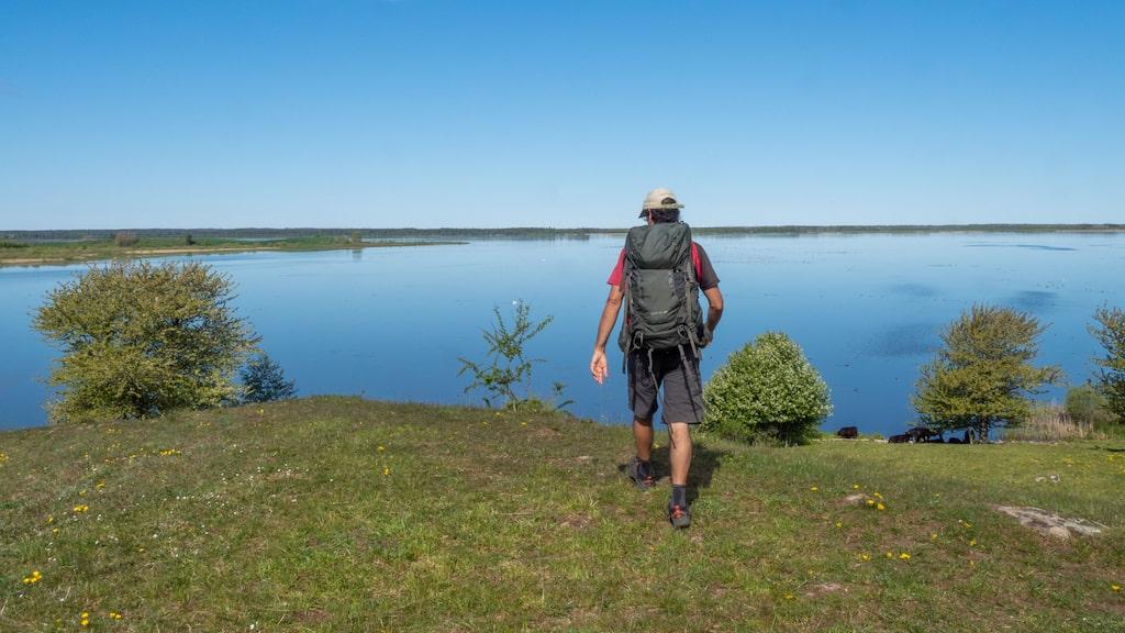 De böljande gröna kullarna vid Hornborgasjön är en fröjd för ögat och balsam för själen