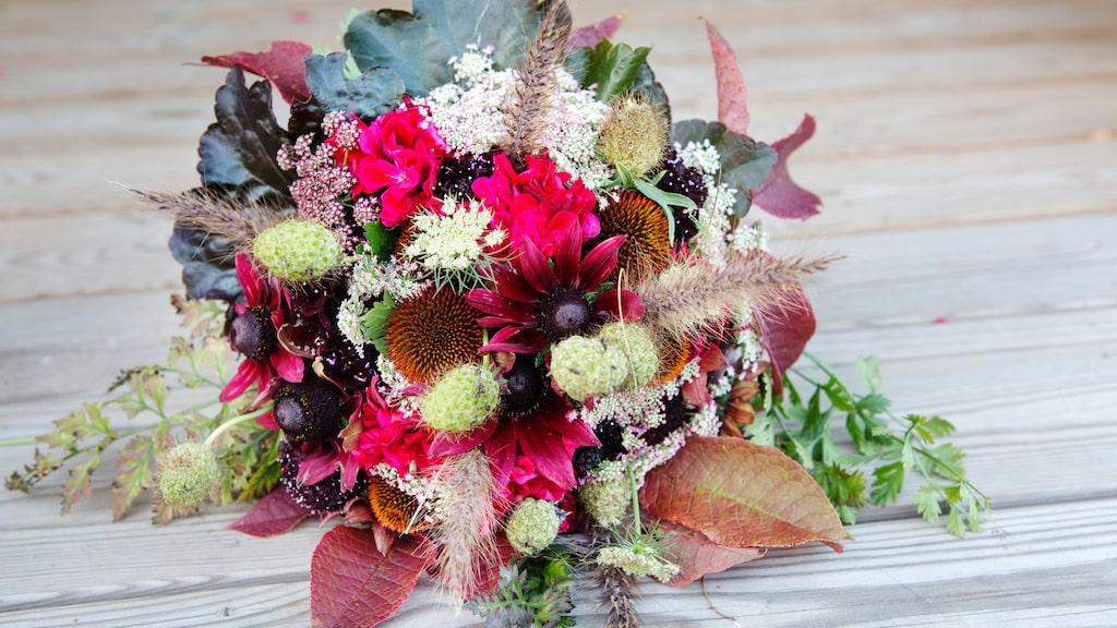 Långt in på hösten kan det fortfarande blomma i överflöd i rabatter och krukor. Passa på att plocka blommor för att göra egna buketter. Bläddra vidare i bildspelet för att läsa mer om blommorna i buketten.