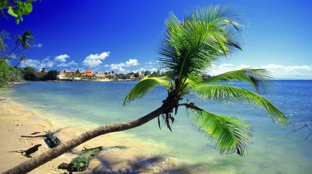 På lilla Tobago finns mycket mer än stränder och palmer.