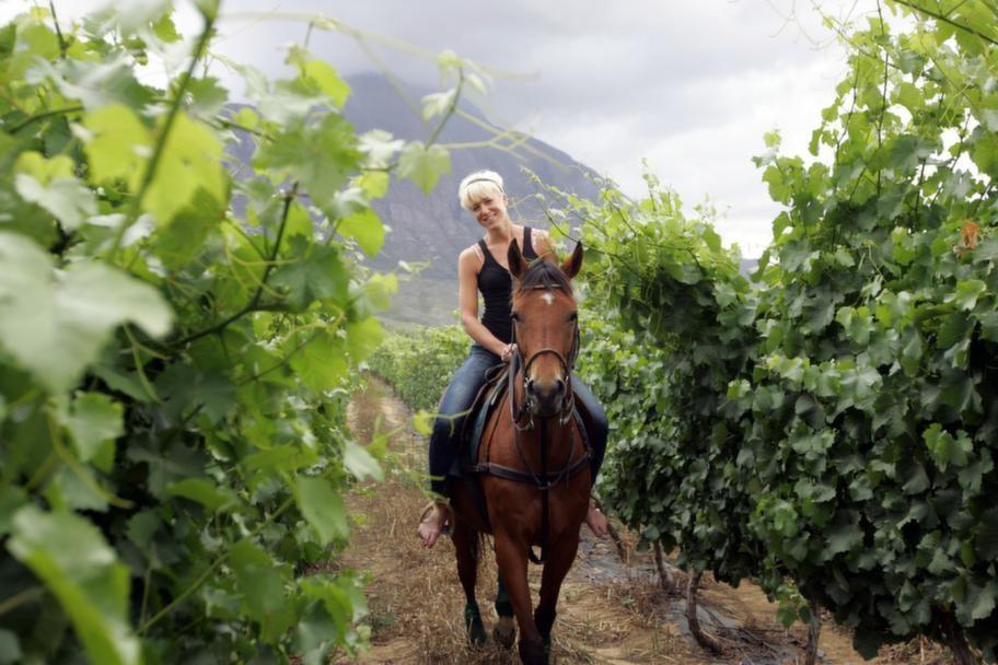 """Personligt. """"Bakom varje vin finns en tanke och en person. Ofta smakar vinet bäst när man står i vingården med peronen som gjort det"""", säger Kajsa Bergqvist. <br>"""