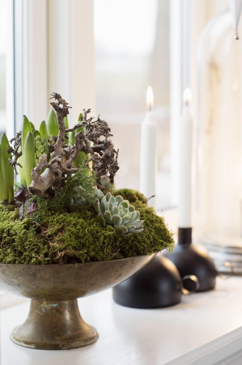 Fint i fönstret. Annika är florist och älskar att göra jularrangemang, gärna med mossa och hyacinter. Fatet med blommor är antikt och ljusstakarna kommer från Ikea.