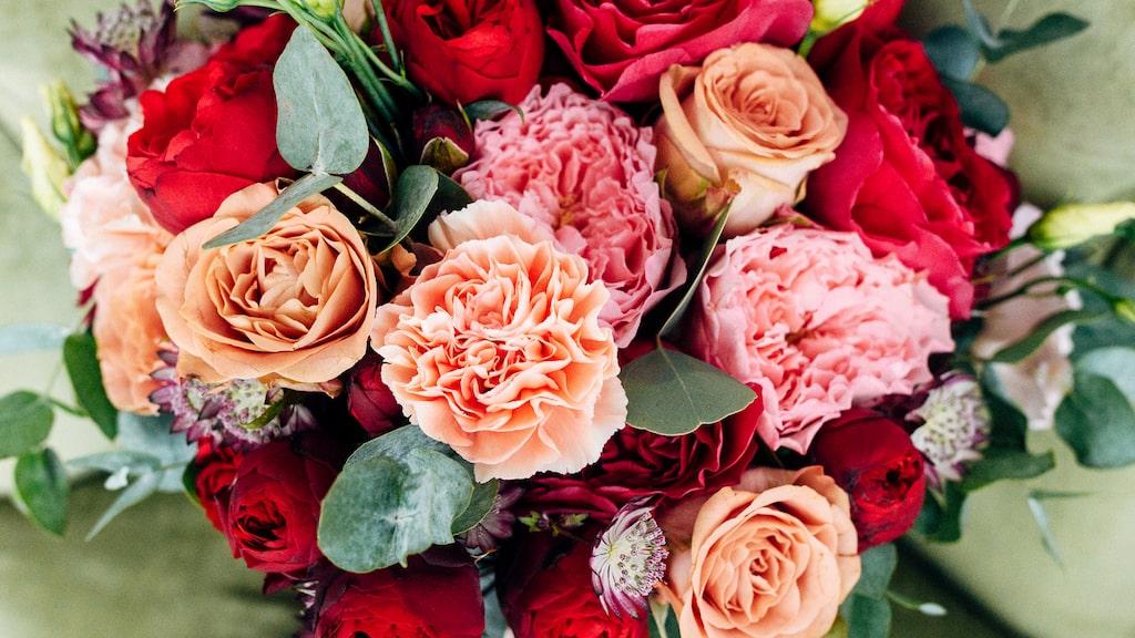 Tycker du att dina snitt blommor vissnar alldeles för fort? Är det rosor har du förmodligen fel temperatur på vattnet.