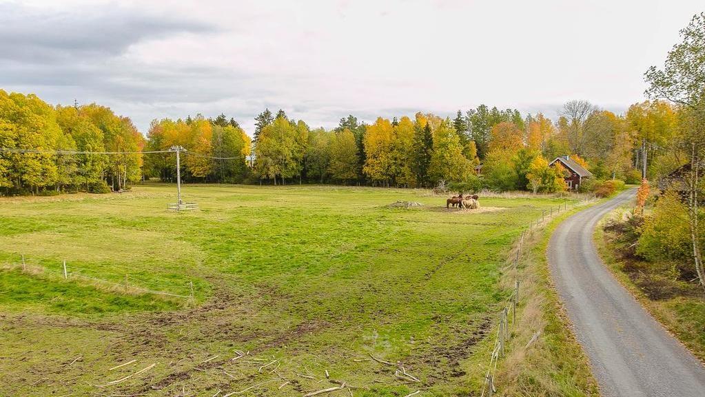 Natur, djur och betesmarker överallt.