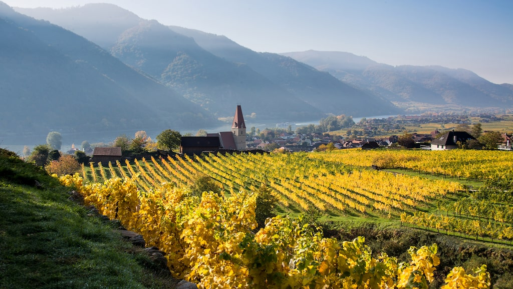 Följ med till Österrike och vinbyarna där druvsorten Grüner Veltliner är kung.
