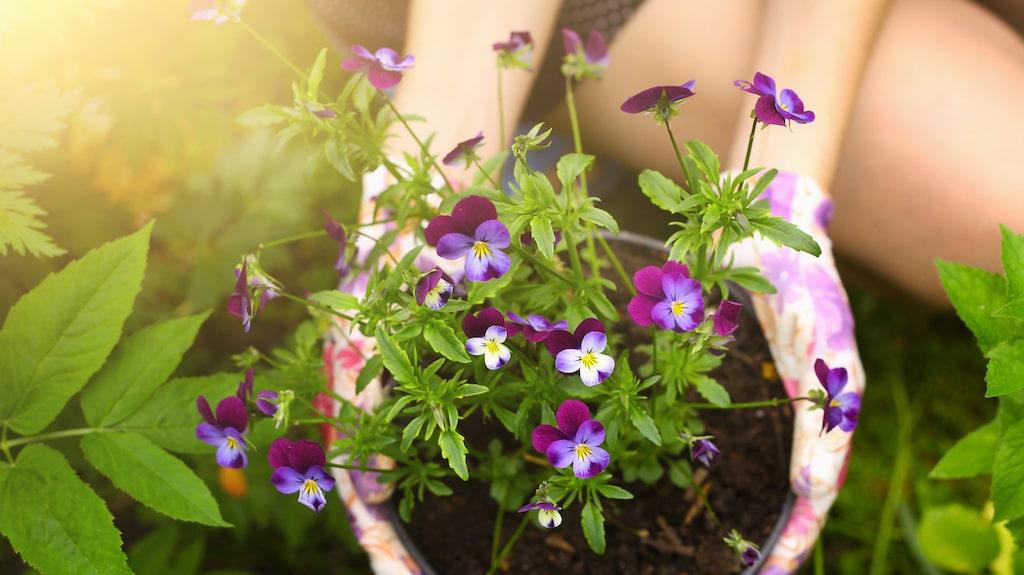 Vilka blommor och växter du vill ha i din rabatt behöver styras av flera saker – till exempel om du kommer se rabatten på nära håll eller på avstånd. Ju längre bort den är, desto större växter bör du ha.