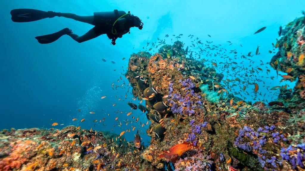 Snorkling och dykning håller världsklass på Maldiverna.