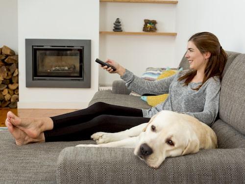 Hundfästningen trivs inomhus och sprids lätt på exempelvis hunddagis.